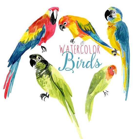 Exotic bird clipart clipart black and white Watercolor Tropical Birds, Parrot Clip Art, Bird Clipart, Exotic ... clipart black and white