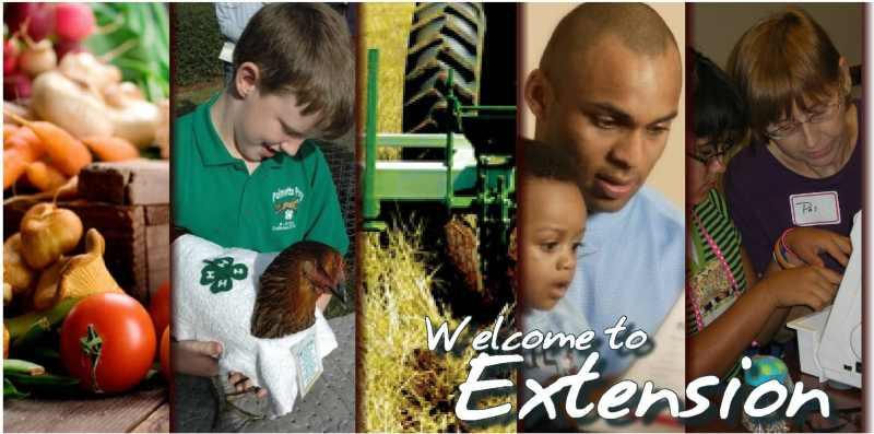 Extension service clip Johnson | Texas AgriLife Extension Service clip