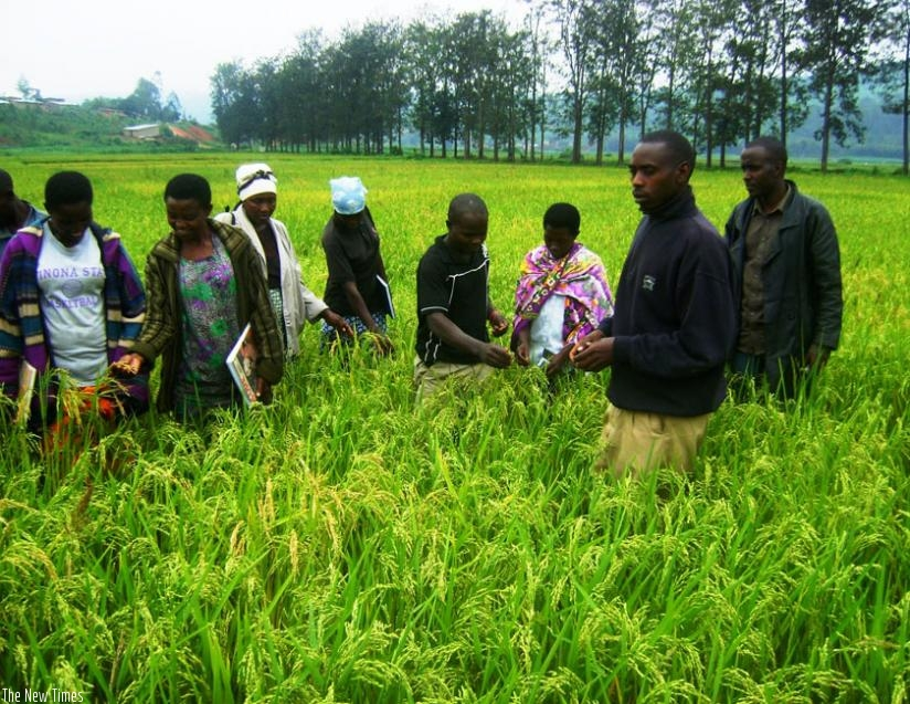 Extension service graphic freeuse How farmer-to-farmer extension service model is transforming agric ... graphic freeuse