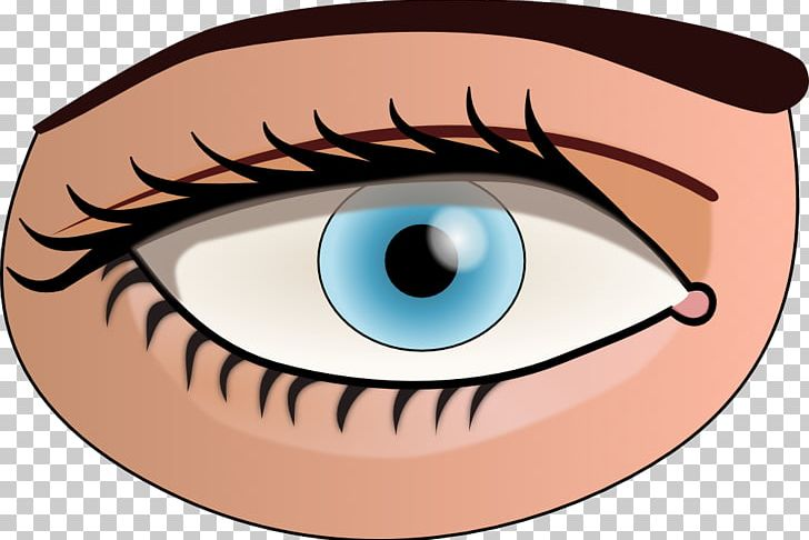 Eye color clipart banner royalty free library Human Eye Color PNG, Clipart, Cartoon, Cheek, Color, Document, Eye ... banner royalty free library
