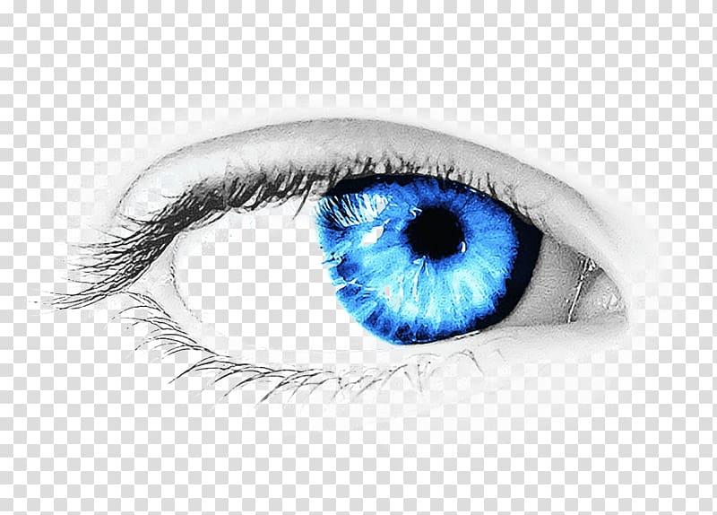 Eye color clipart vector download Blue eye illustration, Eye color , Eye transparent background PNG ... vector download