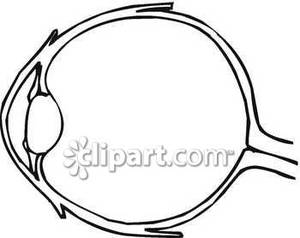 Eyes anatomy clipart clip art download Diagram Of Basic Eye Structure - Royalty Free Clipart Picture clip art download