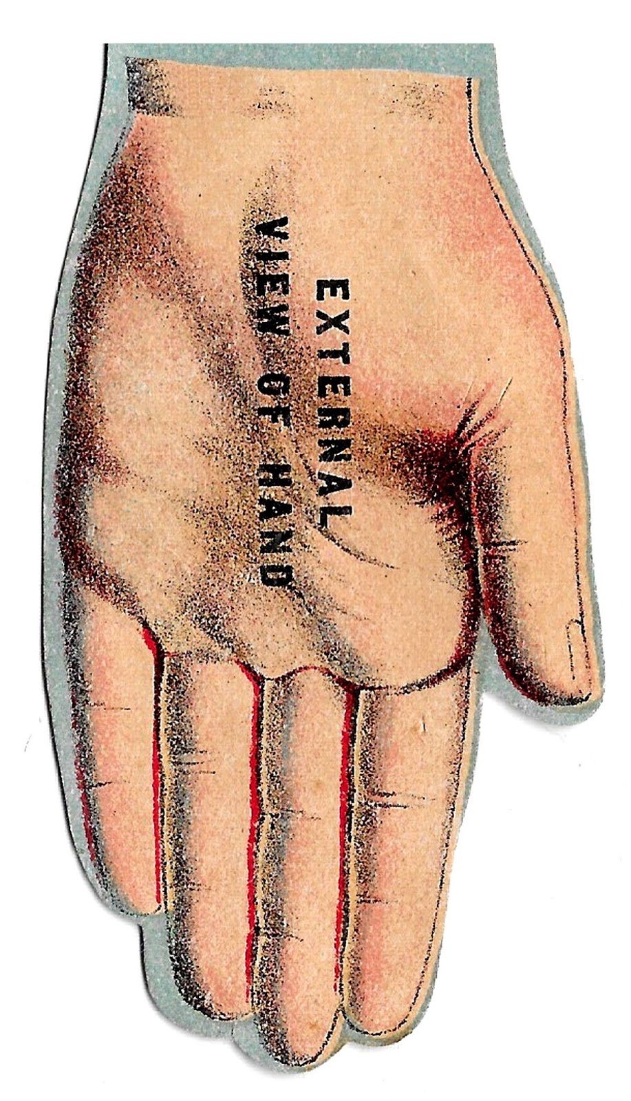 Eyes anatomy clipart png download Antique Images: Free Vintage Human Anatomy Illustration Images Eye ... png download