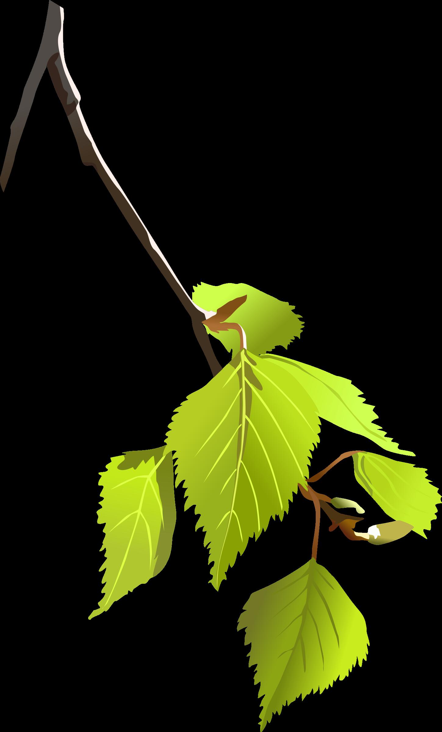 Fall birch tree clipart banner Clipart - Birch leafs banner