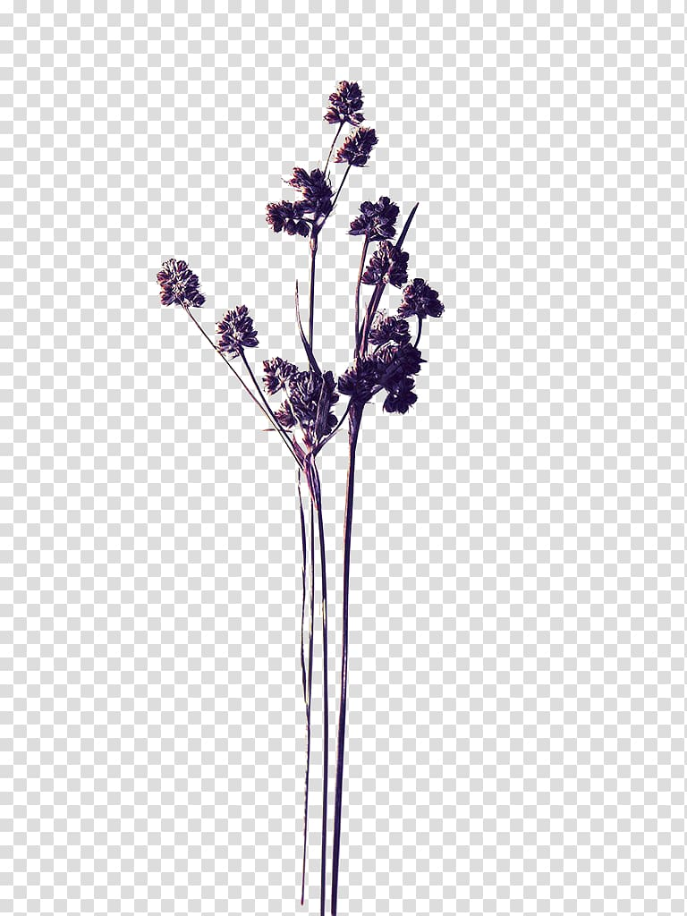 Fall dried flower clipart clipart png transparent jpg freeuse download Purple petaled flowers, Pressed flower craft , Purple dried flowers ... jpg freeuse download