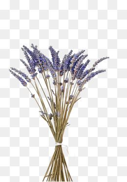 Fall dried flower clipart clipart png transparent image freeuse stock 2019 的 Purple Lavender With Dried Flowers, Purple, Lavender, Dried ... image freeuse stock