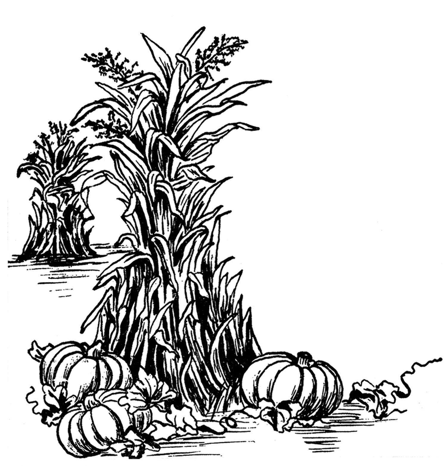 Harvest clipart black and white jpg stock Fall Harvest Clip Art! | fall | Fall clip art, Fall images, Clip art jpg stock