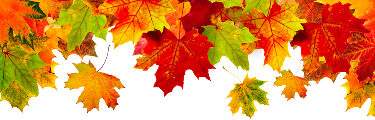 Fall header clipart svg library library Fall-Leaves_Header1 | CWA 9003 svg library library