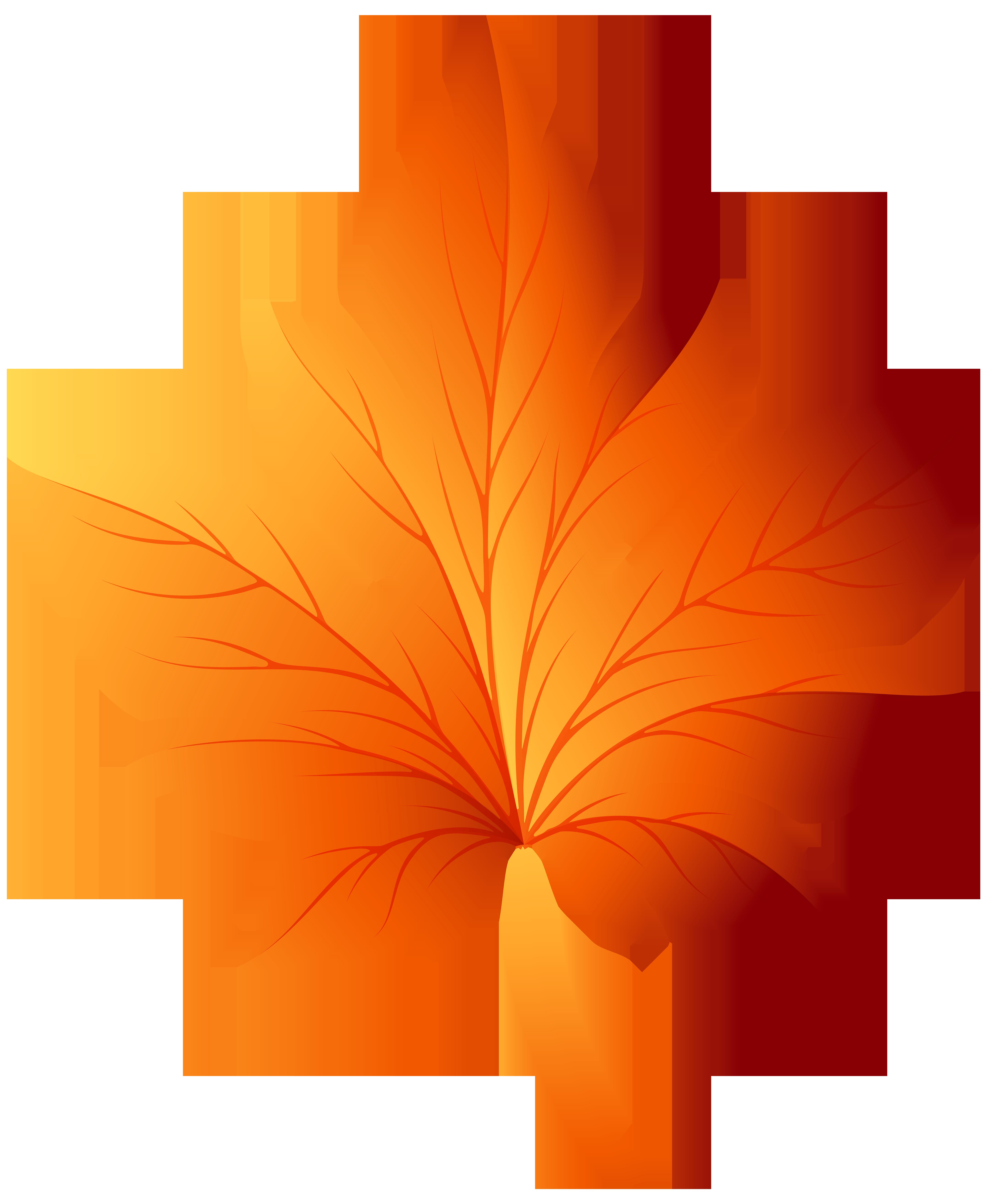 Veined leaf clipart transparent