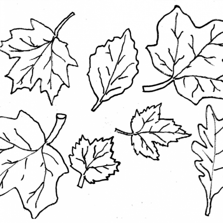 Autumn leaves coloring clipart