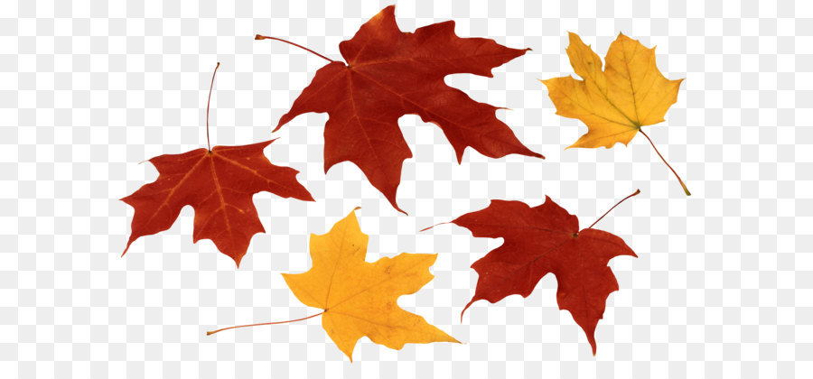 Fall leaves clipart png banner library download Green Leaf Background png download - 3784*2372 - Free Transparent ... banner library download