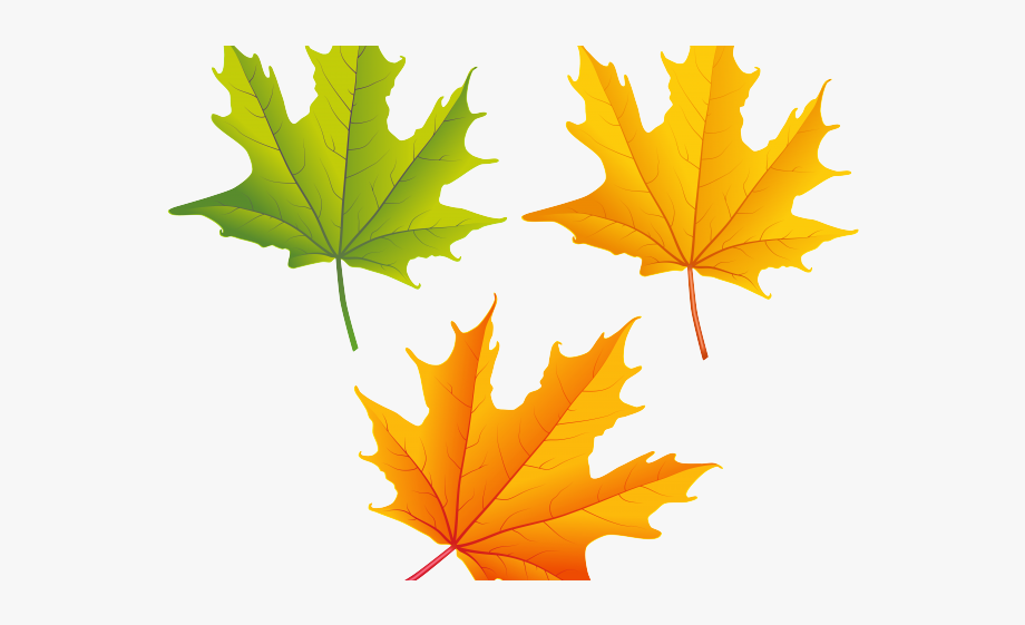 Leaves free clipart graphic royalty free download Free Maple Leaf Clipart Fall Leaves Clipart Clear Background ... graphic royalty free download