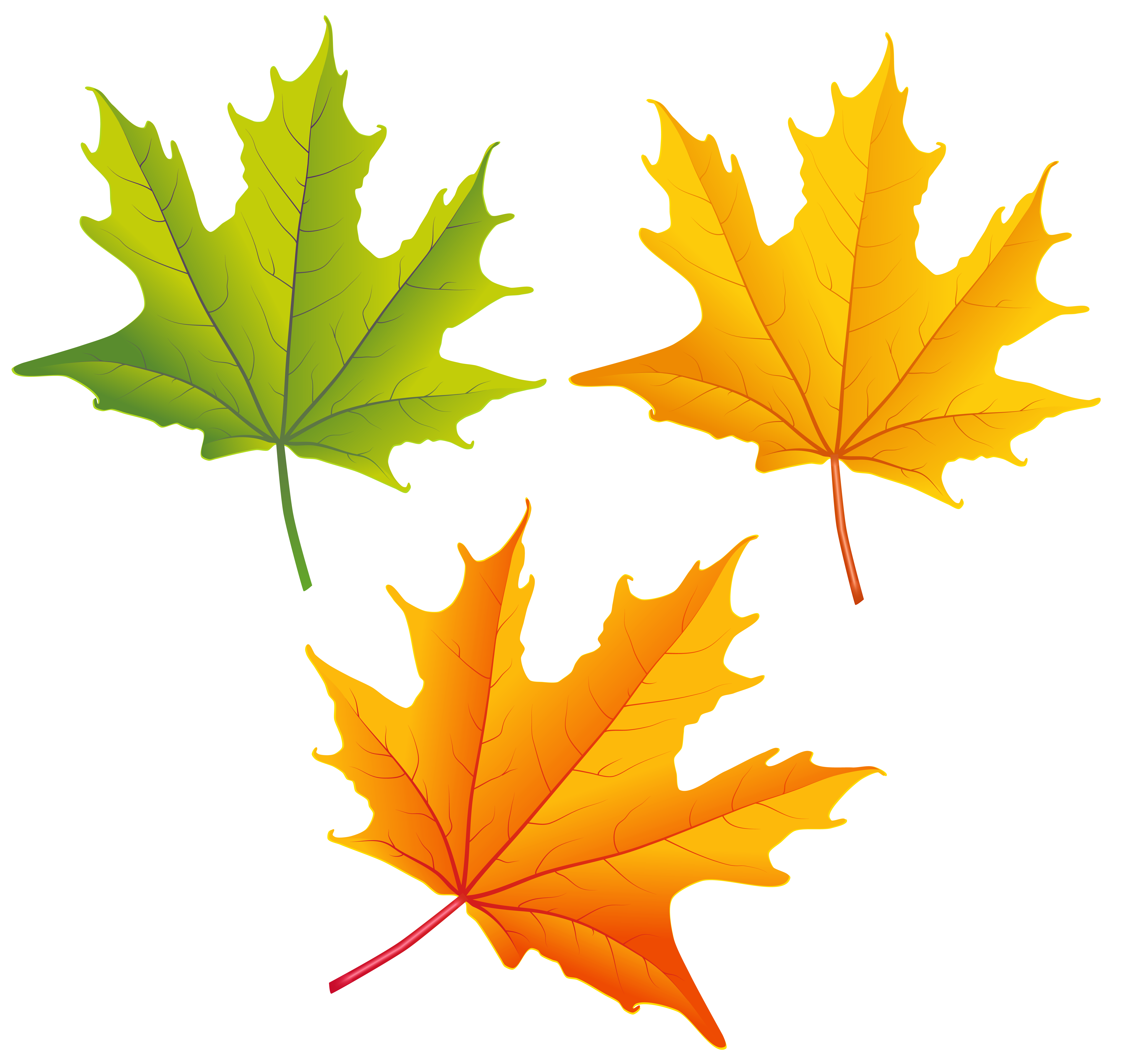 Thanksgiving leaves clipart vector transparent download Set of Autumn Leaves PNG Clipart Image | Gallery Yopriceville ... vector transparent download