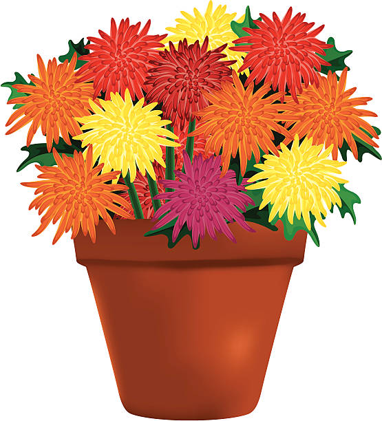 Fall mums clipart graphic royalty free Fall Mums Clipart graphic royalty free