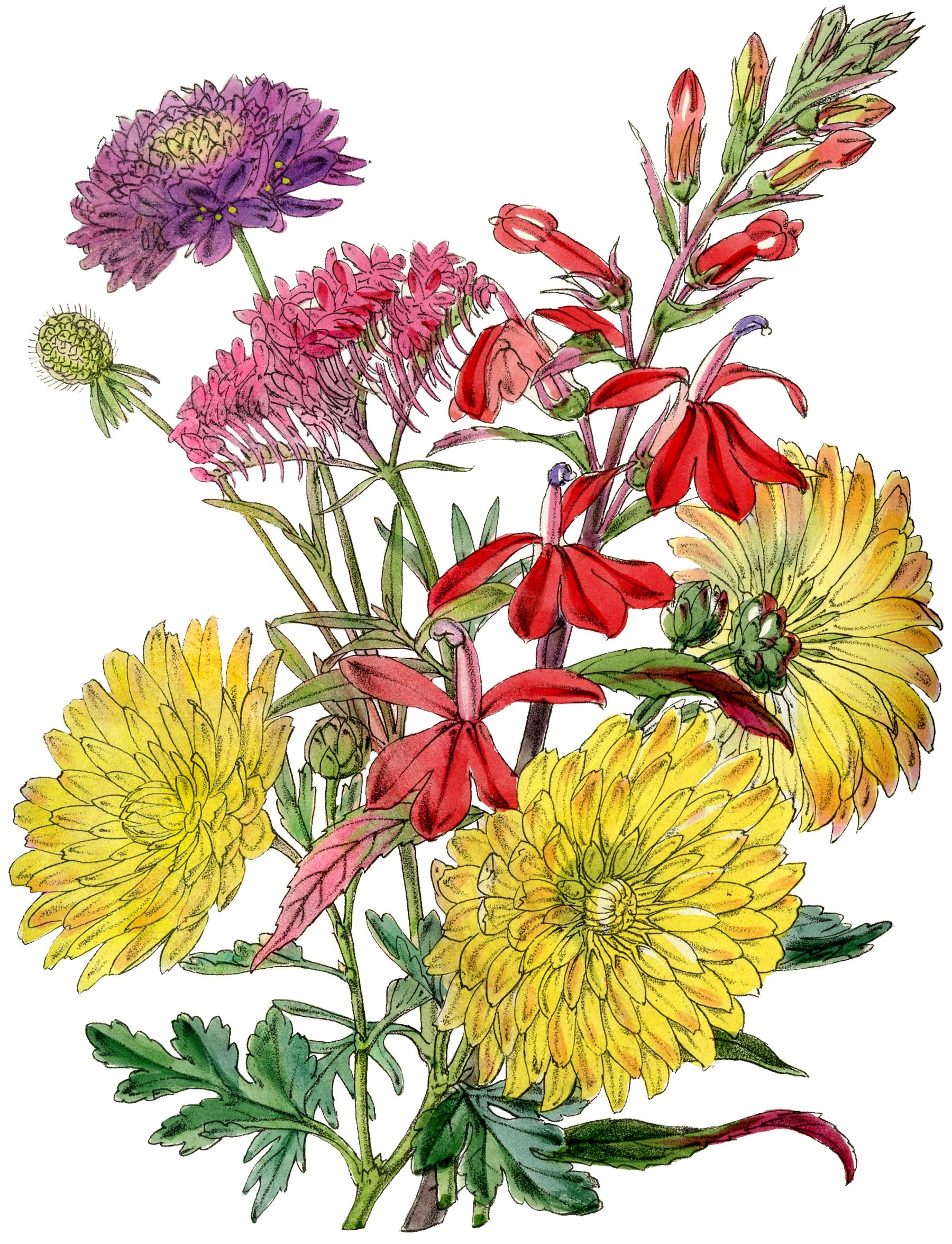 Fall mums clipart image download HD Fall Mums Clip Art Pictures » Free Vector Art, Images, Graphics ... image download
