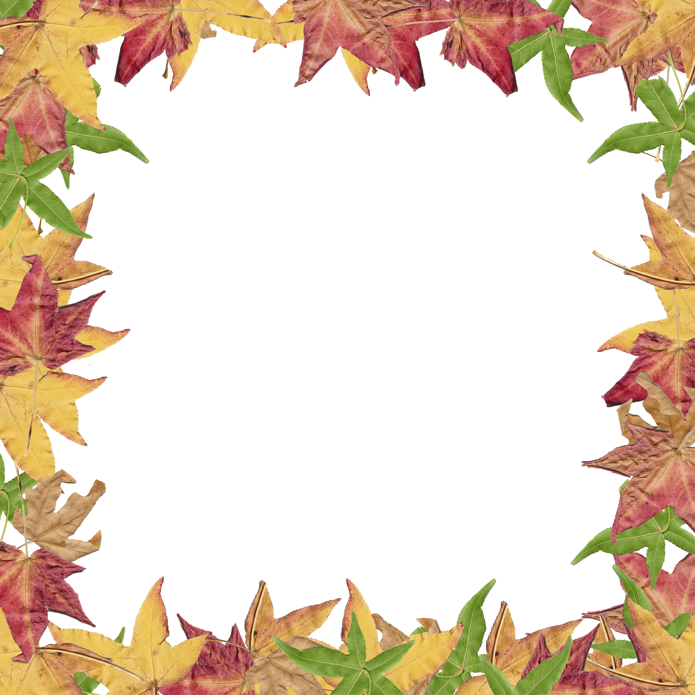 Free clipart thanksgiving borders svg freeuse Free Clipart Fall Leaves at GetDrawings.com | Free for personal use ... svg freeuse