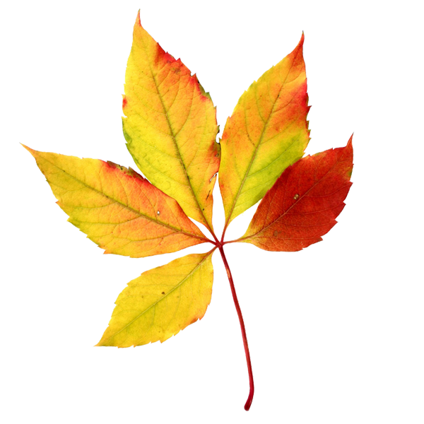 Fall tree clipart thanksgiving invites picture freeuse download All About the Fall Equinox | Pinterest | Fall leaves, Clip art and ... picture freeuse download