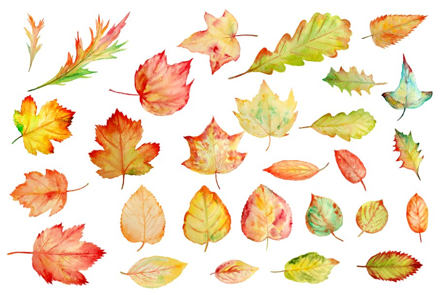 Fall watercolor clipart clipart black and white Watercolor Autumn Leaves Clipart clipart black and white