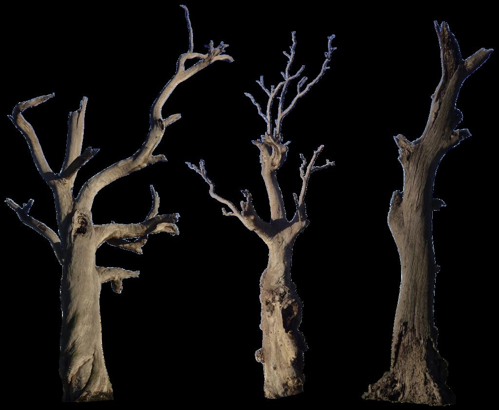 Fallen tree clipart vector free download Dead Tree Pack 001 - HB593200 by hb593200 on DeviantArt vector free download