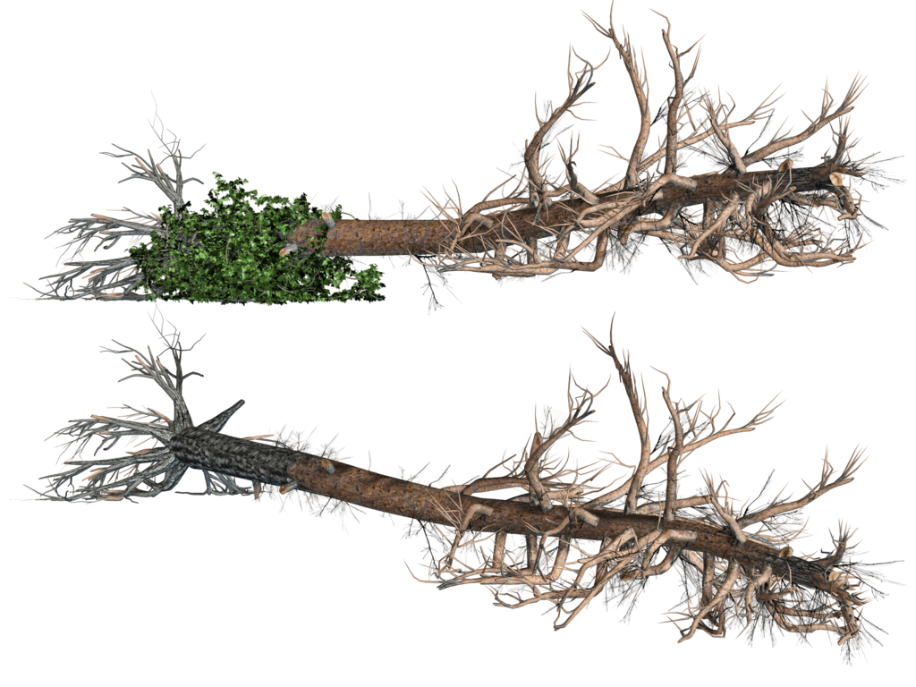 Fallen tree clipart graphic transparent Fallen Trees 02 PNG Stock by Roy3D on DeviantArt graphic transparent