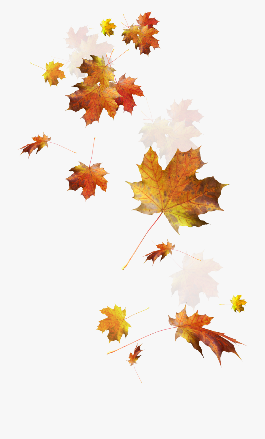 Falling autumn leaves clipart image transparent download Transparent Fall Leaves Falling Png - Autumn Leaves Png Transparent ... image transparent download