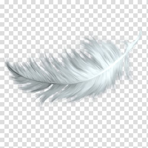 Falling feathers clipart clip library stock White feather illustration, White feather , Falling white feathers ... clip library stock