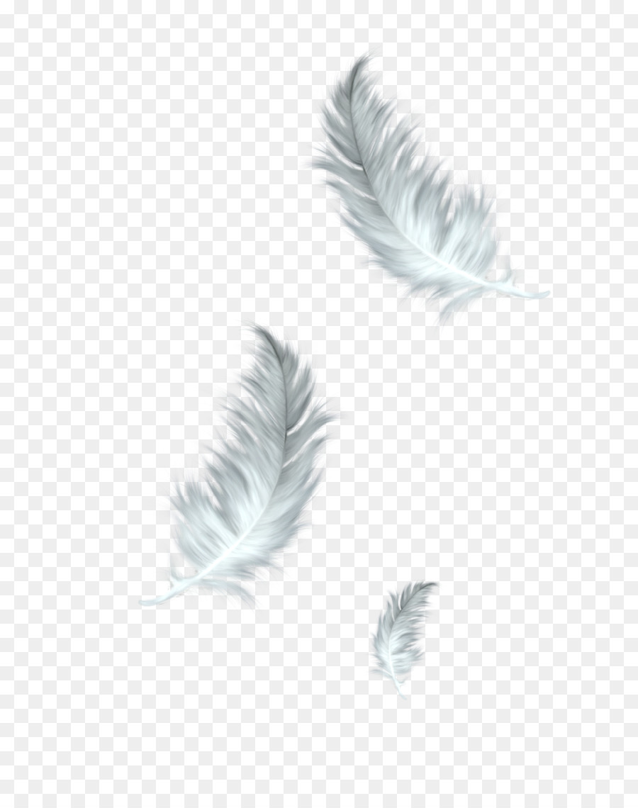 Falling feathers clipart jpg stock Bird Wing clipart - Feather, Bird, transparent clip art jpg stock