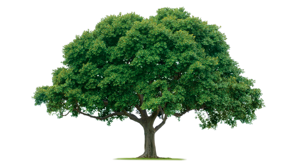 Family reunion tree with roots clipart image transparent library Family Reunion Tree PNG Transparent Family Reunion Tree.PNG Images ... image transparent library