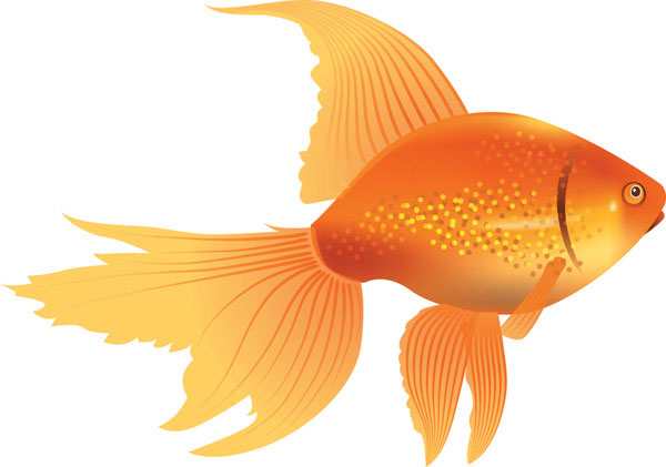 Fancy goldfish clipart clip art freeuse library Fancy goldfish clipart - ClipartFest clip art freeuse library