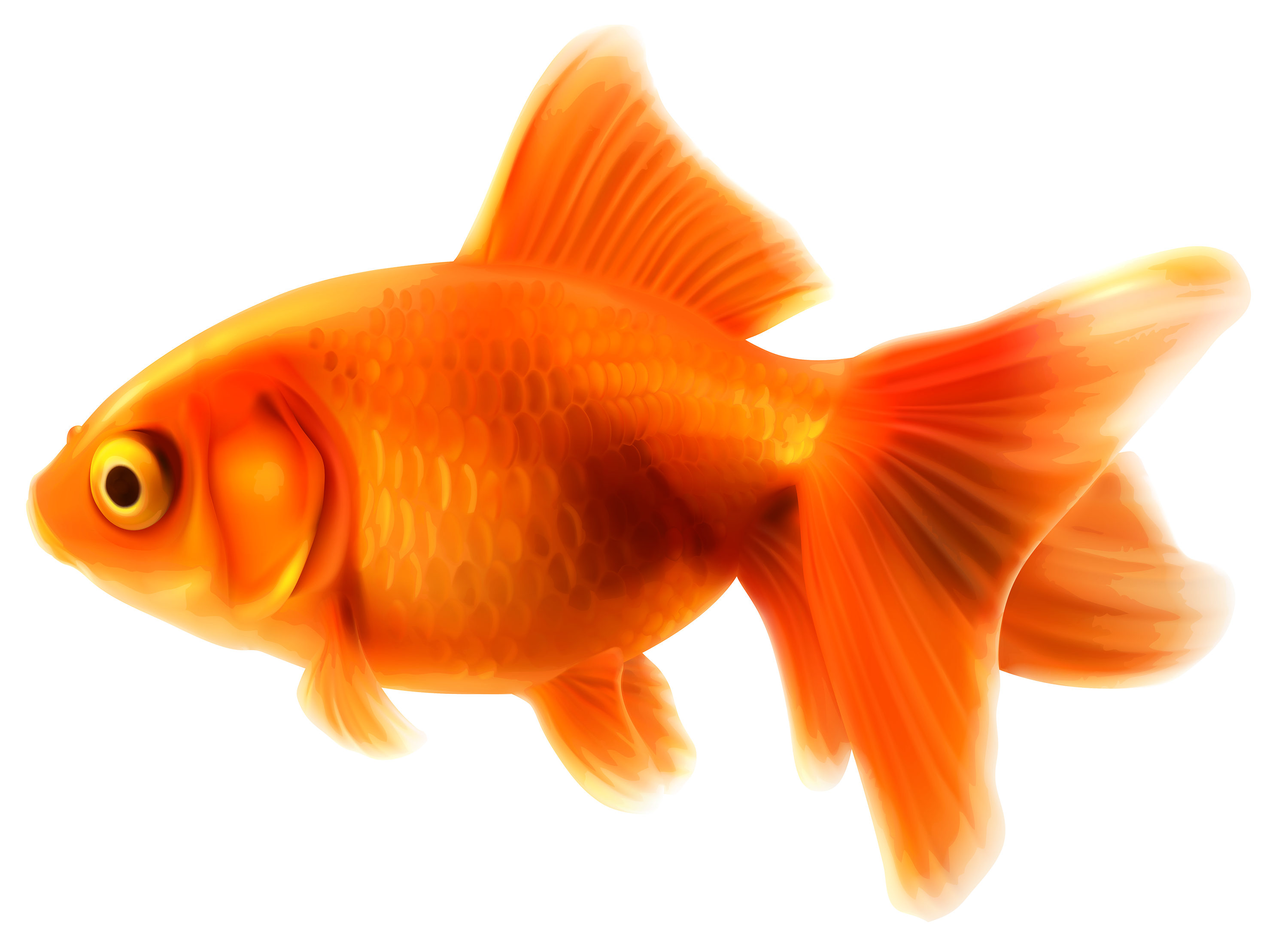 Fancy goldfish clipart svg free library Goldfish PNG Clipart - Best WEB Clipart svg free library