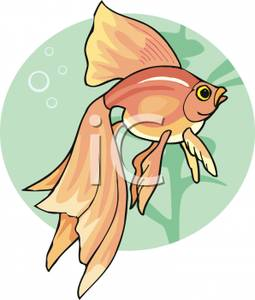 Fancy goldfish clipart clip freeuse download Goldfish With Long Fins - Royalty Free Clipart Picture clip freeuse download