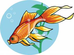 Fancy goldfish clipart stock Goldfish Clipart | Clipart Panda - Free Clipart Images stock