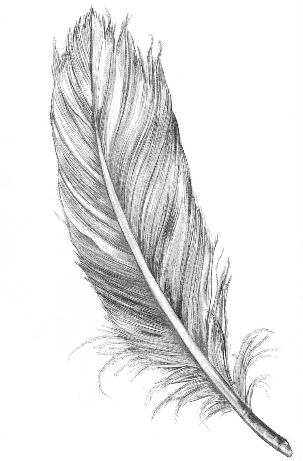 Feather clipart black and white free clip art transparent library Free Feather Black And White Clipart, Download Free Clip Art, Free ... clip art transparent library
