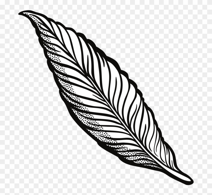 Feather clipart images black and white image library download Feather Drawing Line Art Quill Cartoon - Transparent Background ... image library download
