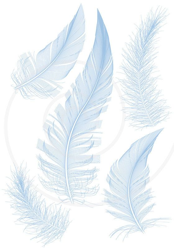 Feather turning into birds clipart clip transparent library Blue bird feathers, clipart, clip art, illustration, drawing ... clip transparent library