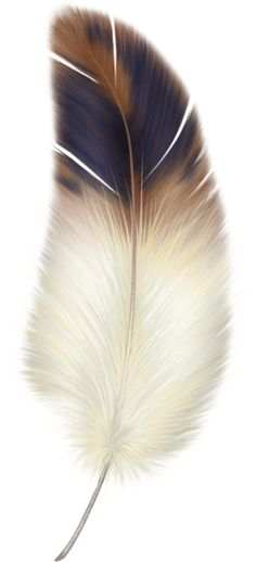 Feather turning into birds clipart jpg transparent library Antique Clip Art - Fabulous Feather - Autumn Tones | Graphics ... jpg transparent library