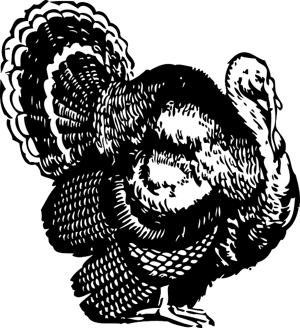 Thanksgiving clipart public domain jpg freeuse download Turkey Feathers Black And White Clipart ✓ All About Clipart jpg freeuse download