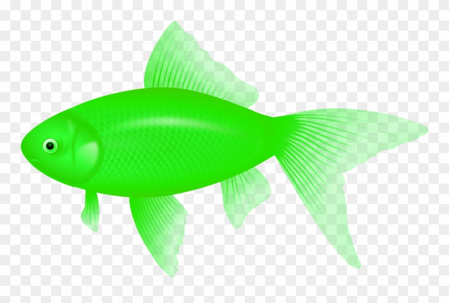 Feeder fish clipart svg freeuse download Clipart Of Fish, Ultra And Fish Of - Feeder Fish - Png Download ... svg freeuse download