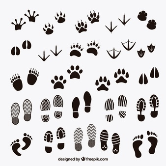 Feet vector clipart jpg freeuse library Foot Vectors, Photos and PSD files | Free Download jpg freeuse library