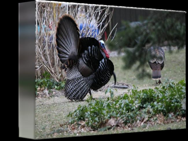 Female turkey monogram clipart clip freeuse Wild turkeys
