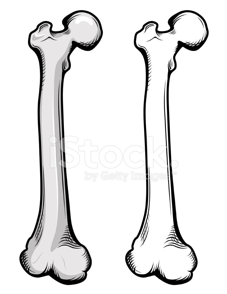 Femur clipart png freeuse download Femur bone clipart 5 » Clipart Portal png freeuse download