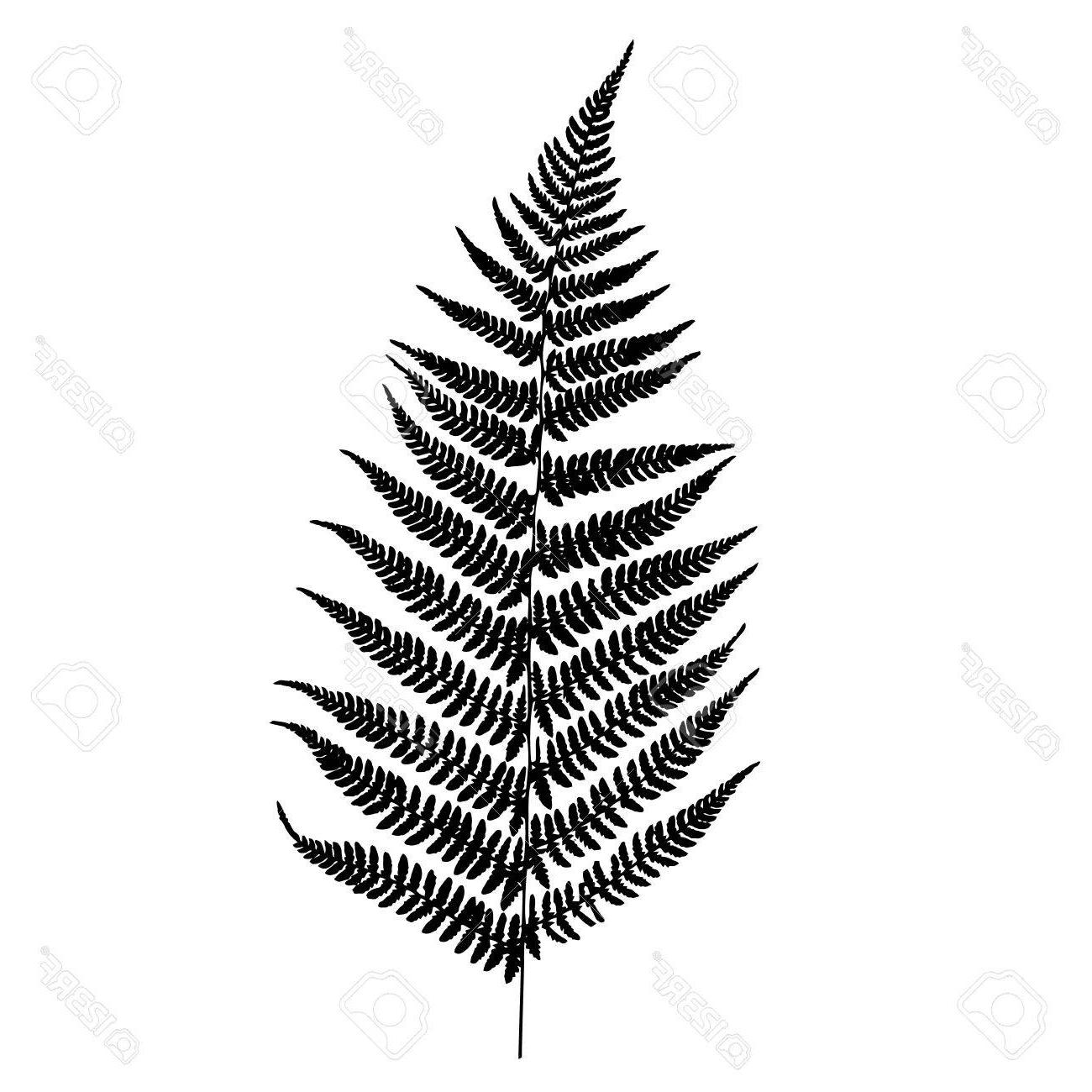 Fern silhouette clipart stock HD Fern Silhouette Vector Design » Free Vector Art, Images, Graphics ... stock