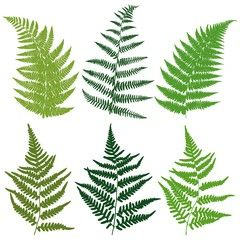 Fern silhouette clipart graphic library library A set of silhouettes fern leaves. Vector. | fern leaves | Leaves ... graphic library library