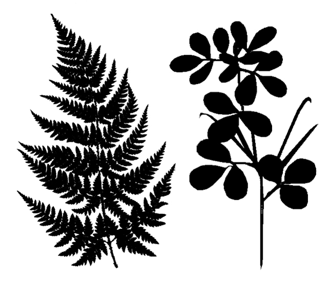 Fern silhouette clipart picture library Download plant leaves silhouette clipart Fern Leaf Clip art picture library