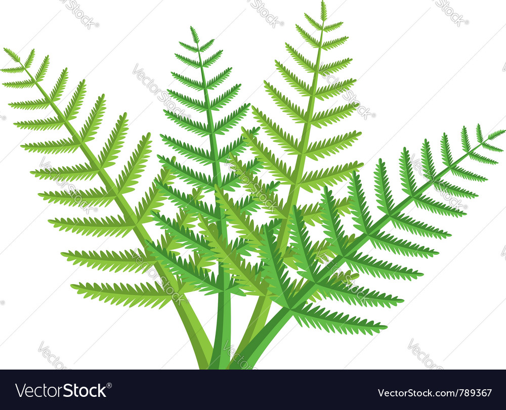 Fern vector clipart clipart freeuse library Green fern leaves clipart freeuse library