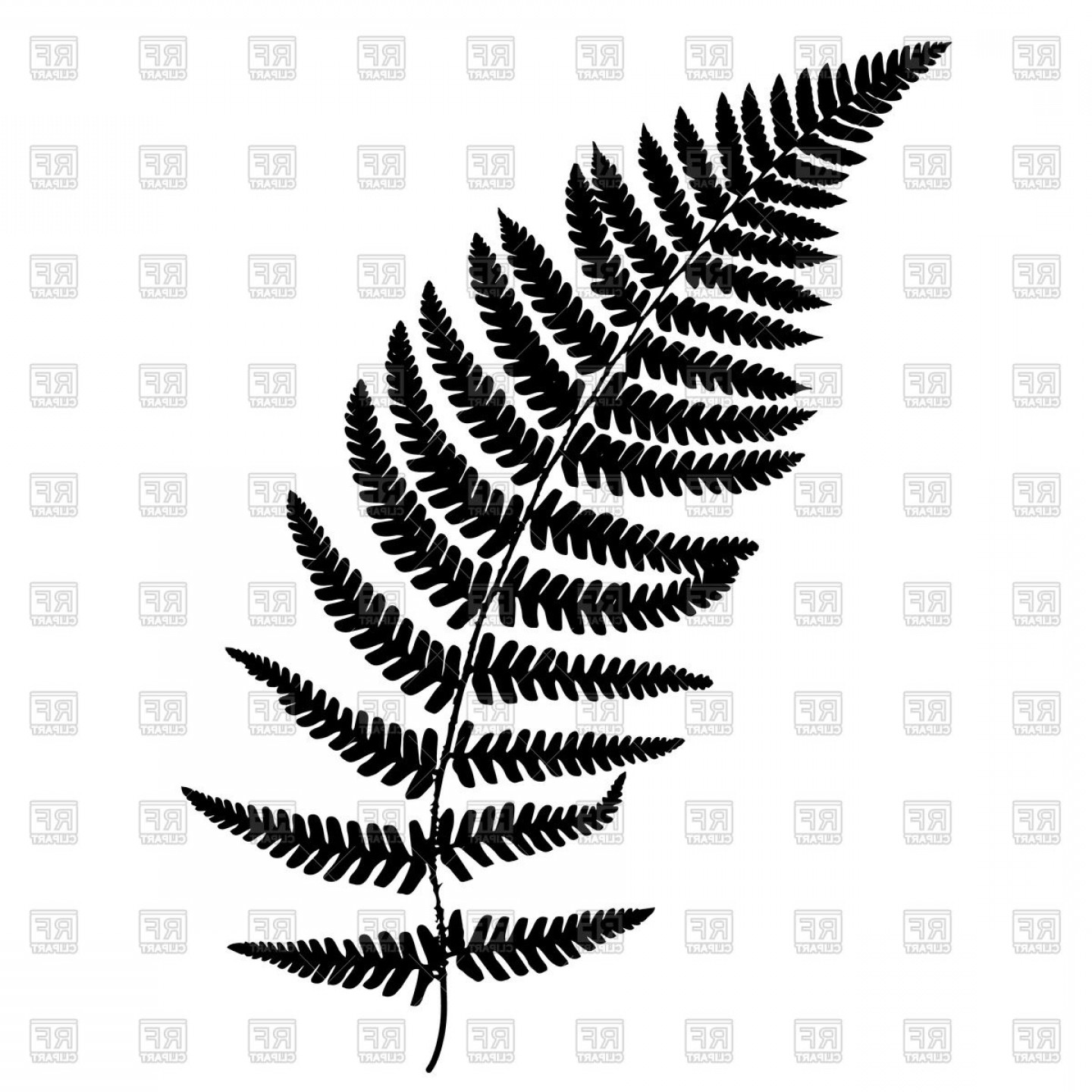 Fern vector clipart picture library Hawaiian Fern Vectors | Savoyuptown picture library