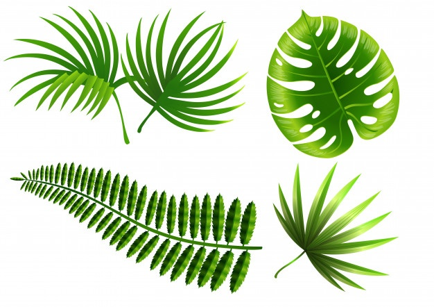 Fern vector clipart jpg black and white Fern Vectors, Photos and PSD files | Free Download jpg black and white