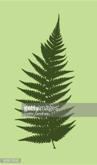 Fern vector clipart clip art black and white Fern Vector premium clipart - ClipartLogo.com clip art black and white