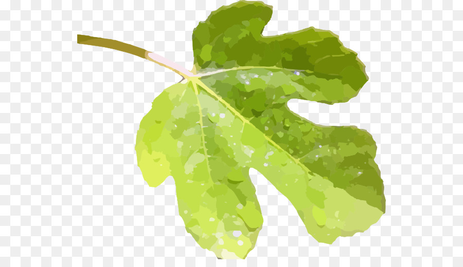 Fig leaf clipart free svg transparent stock Fig Leaf Common Fig Clip Art - Fig. Png #211138 - PNG Images - PNGio svg transparent stock