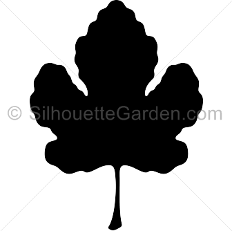 Fig leaf clipart free clip library download Fig leaf clip art clipart images gallery for free download | MyReal ... clip library download